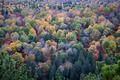 Fall treetops - PhotoDune Item for Sale