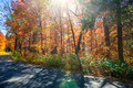 Sunflare in fall forest - PhotoDune Item for Sale