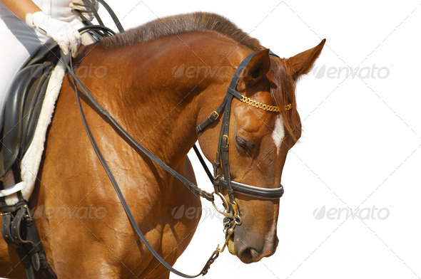 Equestrian Sport - Dressage - Stock Photo - Images