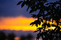 Tree silhouette over sunset - PhotoDune Item for Sale