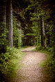 Path in dark moody forest - PhotoDune Item for Sale
