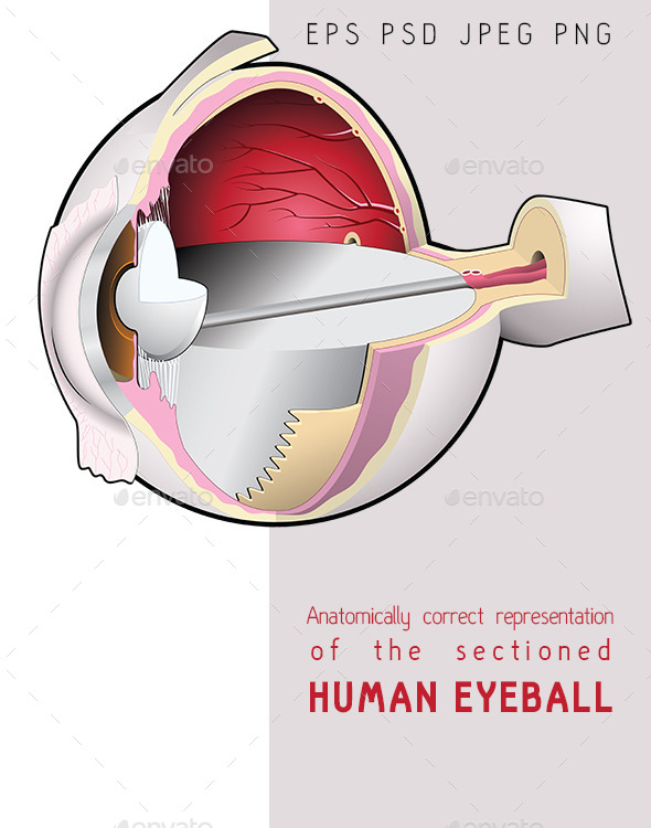 GraphicRiver The Human Eye Section 10224463