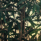 Bamboo Plants In The Wind - VideoHive Item for Sale