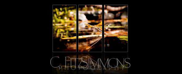 CLFitzsimmons