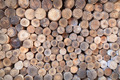 Firewood texture - PhotoDune Item for Sale