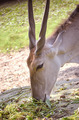 Deer - PhotoDune Item for Sale
