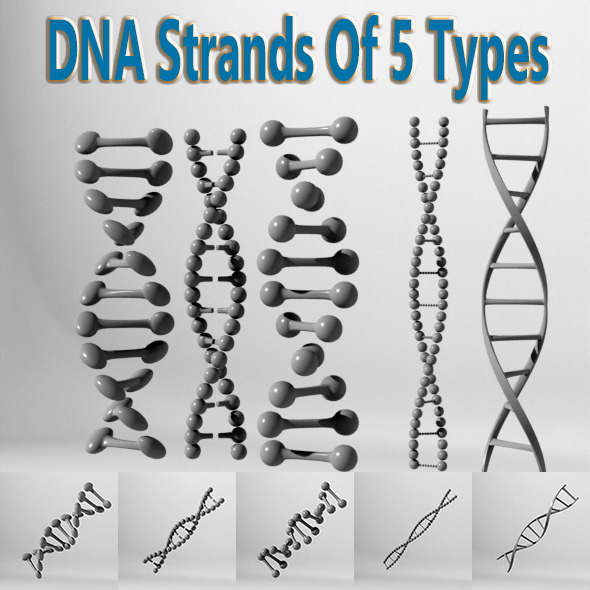 3DOcean DNA Strands Of 5 Types 10290229