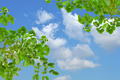 green leaf - PhotoDune Item for Sale