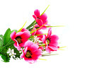 Artificial pink flower on white background - PhotoDune Item for Sale