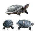 Set of turtles. turtles from different sides. - PhotoDune Item for Sale
