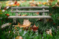 Collage bench in autumn grass. - PhotoDune Item for Sale