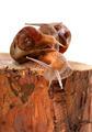 Three snails on pine-tree stump - PhotoDune Item for Sale