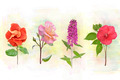 Flower Background - PhotoDune Item for Sale