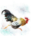 Rooster Running - PhotoDune Item for Sale