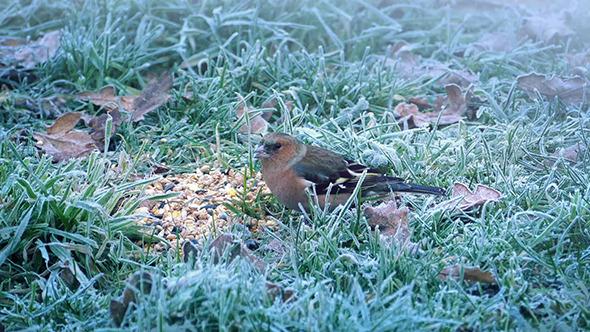Little Bird Eating Seeds Scared Off By Bigger Bird