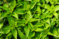 Wild nettles growing in the spring - PhotoDune Item for Sale