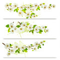 Three spring banners with blossoming tree brunch with spring flowers.  - PhotoDune Item for Sale