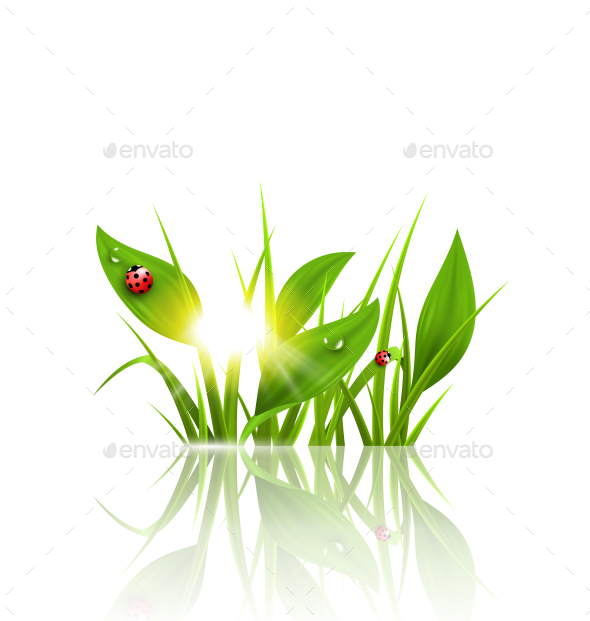 GraphicRiver Green Grass and Ladybugs with Sunrise 10335995