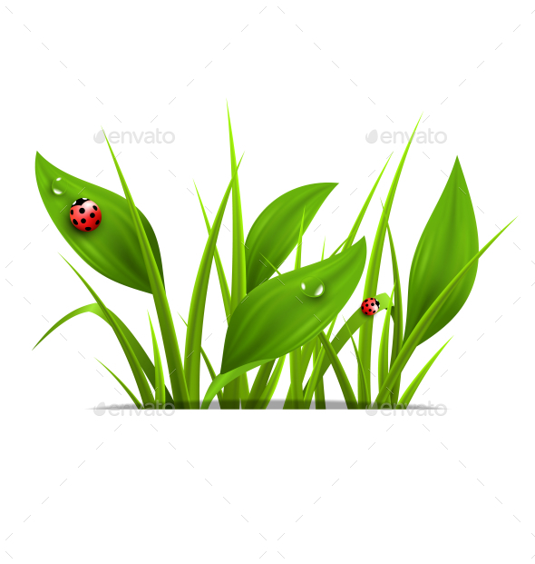 GraphicRiver Green Grass and Ladybugs 10336054