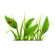 Green Grass and Ladybugs - GraphicRiver Item for Sale