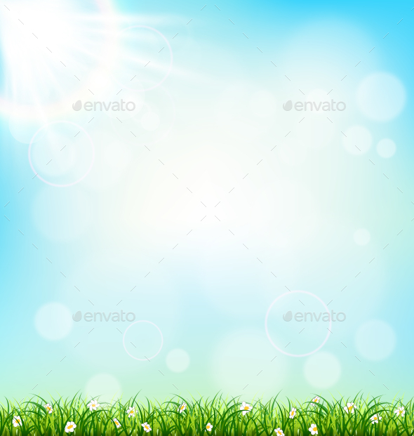 Green Grass Lawn with Chamomiles on Blue Sky