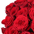 Giving a bunch of roses on birthday, Valentine's or mother's day