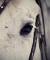 Eye of a horse. - PhotoDune Item for Sale