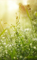 Fresh green grass with dew. - PhotoDune Item for Sale