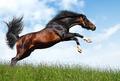 Arabian Stallion Jumps - PhotoDune Item for Sale