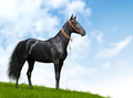 Black Akhal-Teke Horse - PhotoDune Item for Sale