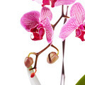 Branch with flowers of an orchid Phalaenopsis. - PhotoDune Item for Sale