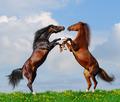 Battle of Horses - PhotoDune Item for Sale