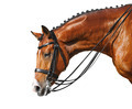 Equestrian Sport - Dressage - PhotoDune Item for Sale