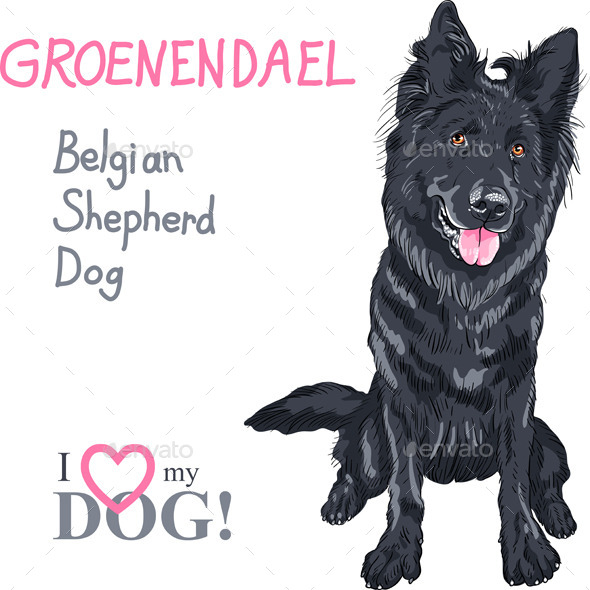 GraphicRiver Dog Belgian Shepherd Dog 10352682
