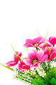 Pink artificial flower on white background - PhotoDune Item for Sale