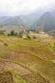 Rice fields on terraced of  Cat Cat Village,Vietnam. - PhotoDune Item for Sale