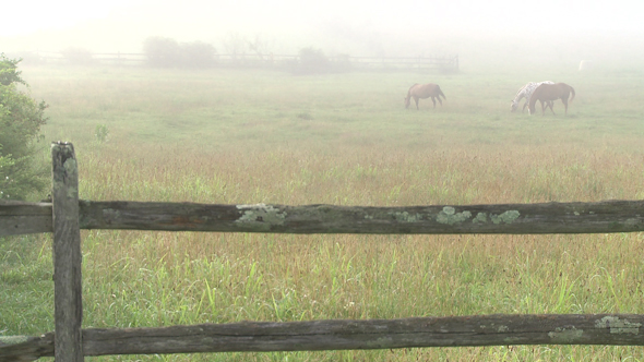 Looking Over A Split Rail Fence To Horses On A Foggy Meadow 2