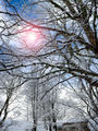 Cold Sun Between Snowy Branches - PhotoDune Item for Sale
