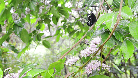Butterfly on Butterfly Tree