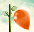 Rose thorn and Red Balloon - PhotoDune Item for Sale