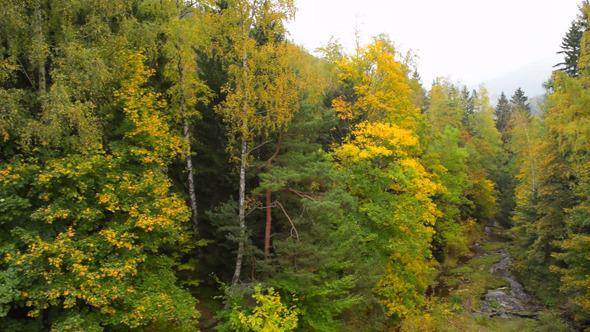 Forest & River Autumn