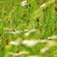 Green Plant Field - VideoHive Item for Sale