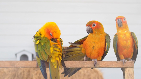 VideoHive Parrot Perch On Log 10405449