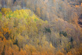 Autumn forest in mountains - PhotoDune Item for Sale