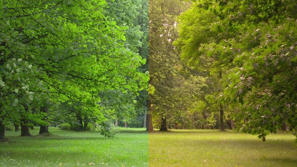 Tree & Wind 2clips