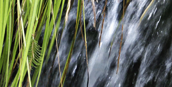 Waterfall and Green Plant