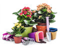 garden tools with flowers isolated - PhotoDune Item for Sale
