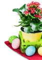 colorful easter eggs and spring flower isolated - PhotoDune Item for Sale