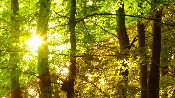 Tree & Sun 2 versions
