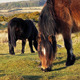 Group Of Horses In Wilderness - VideoHive Item for Sale